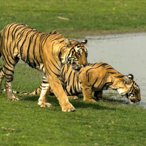 Places To Visit In Ranthambhore